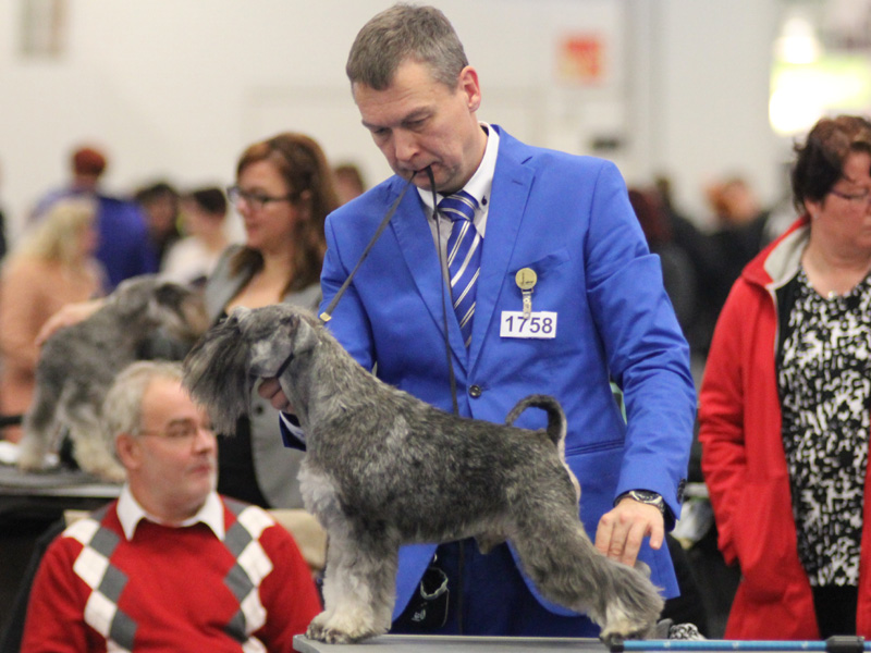 Imbrez Idolizer Best in Champion Class and Best Male 4th on saturday
