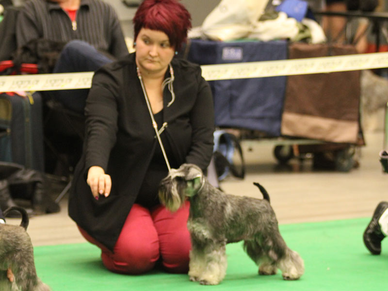 Imbrez Formalizer at Top Dog Show