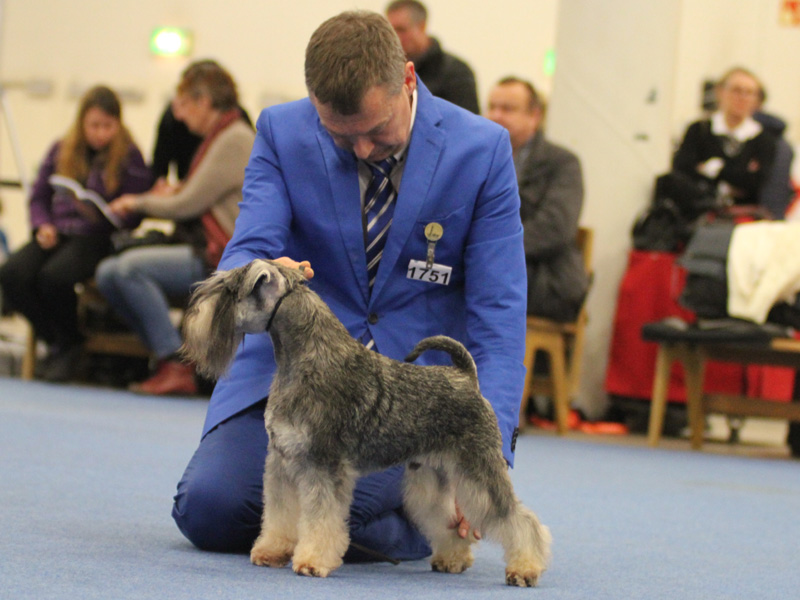 Imbrez Forever Fenway Best in Open Class and Best male 2 on saturday