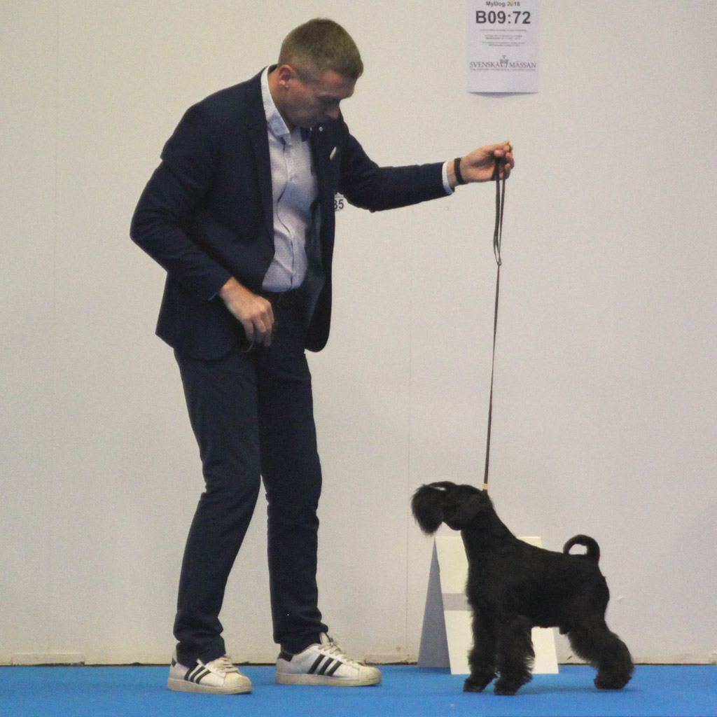 Imbrez Get Bizzy, New International Champion from MyDog 2018
