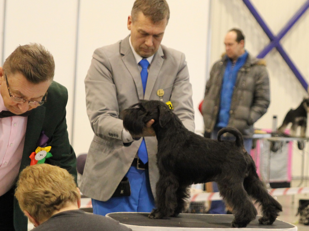 Imbrez Get Bizzy BM2 and RES CACIB both days at Vilna