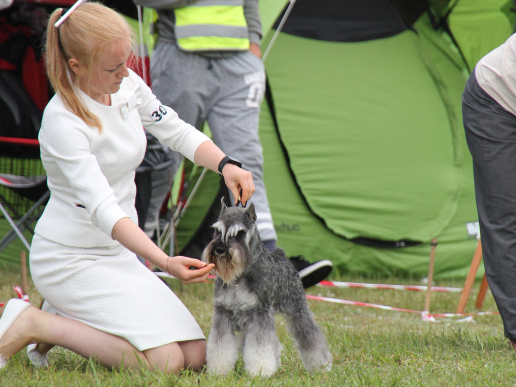 Destineez Crash Run Into Myla at Druskininkai on Sunday, Handler Vilte Sokaityte